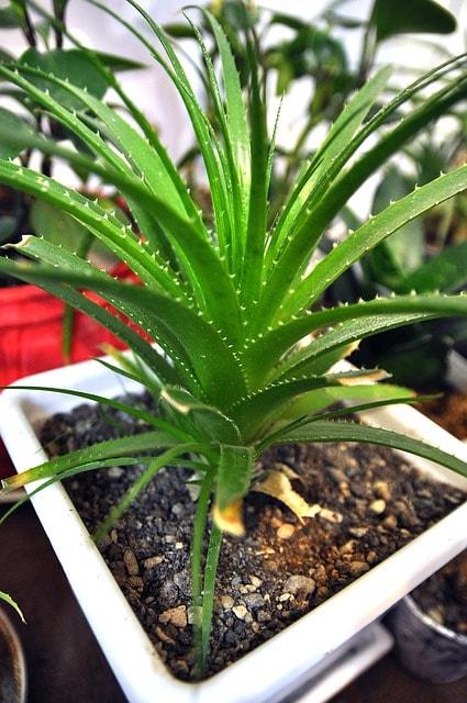 Sun Safety Aloe