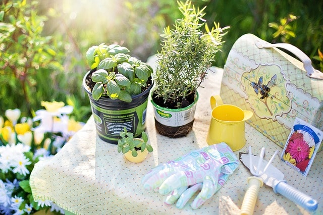 How to Make Your Own Indoor Herb Garden Plants